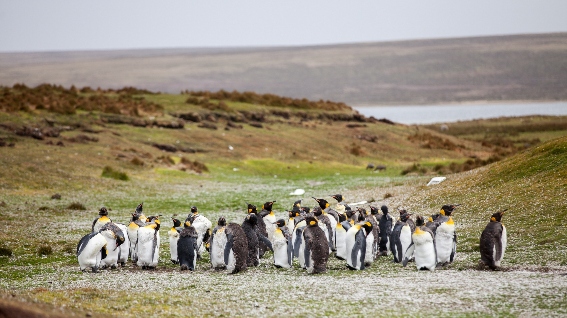 A view in The Falkland Islands