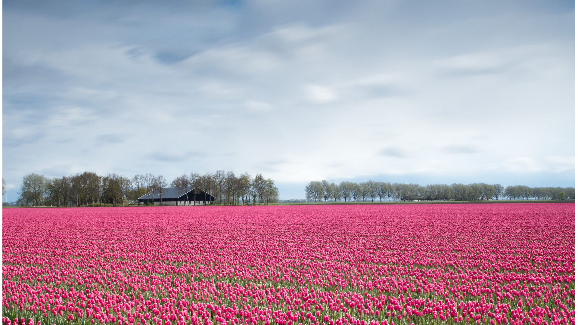 A view in Netherlands
