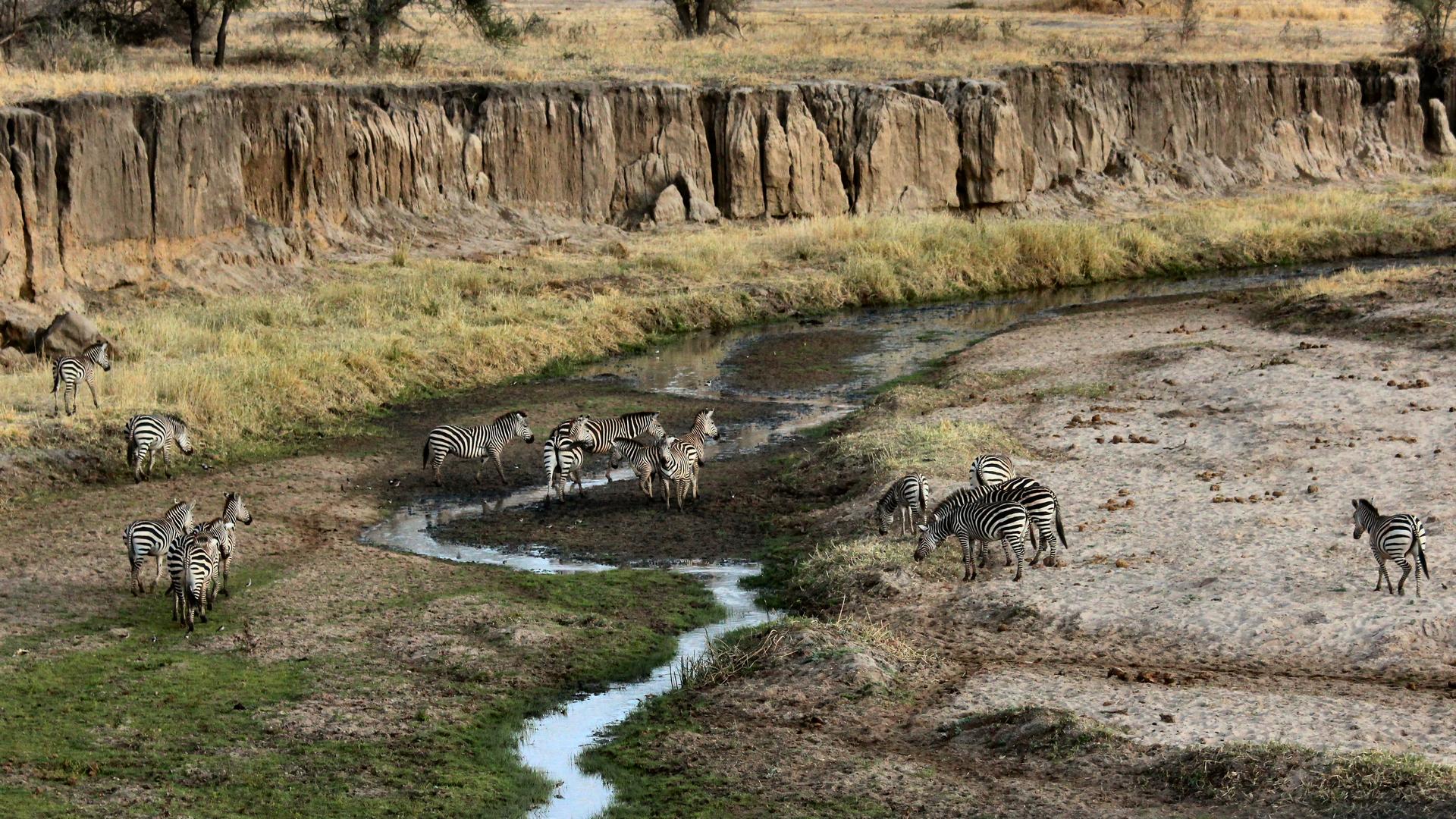 A view in Tanzania